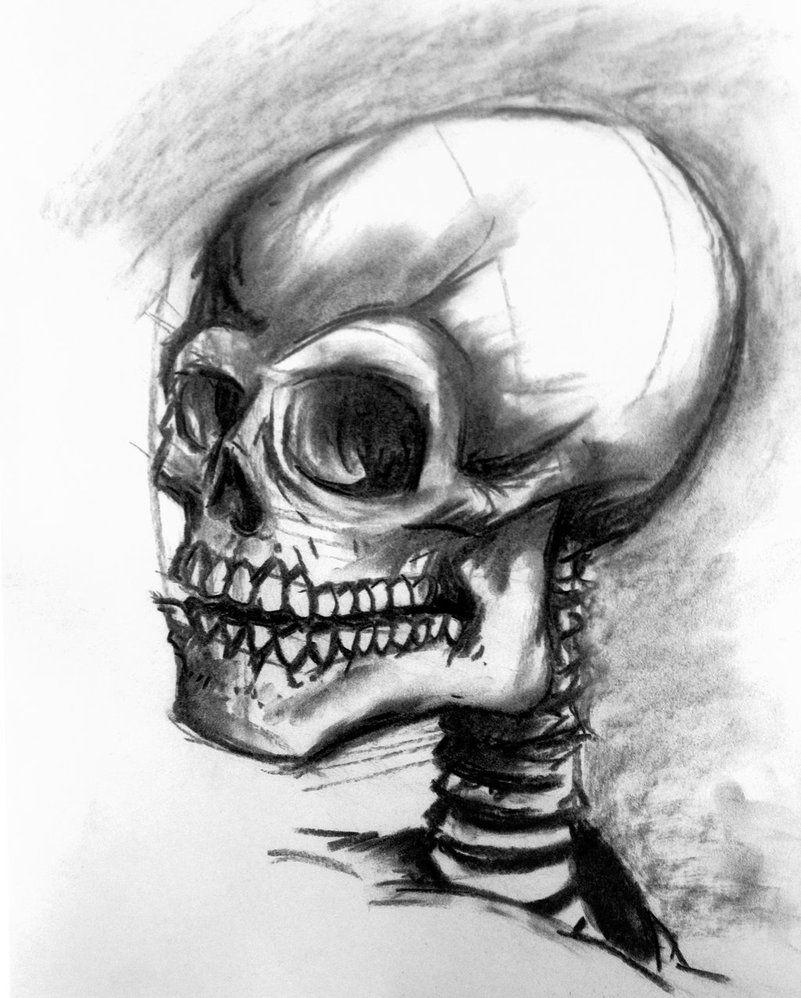 Anatomy Skull Drawing by ~mrkozak on deviantART
