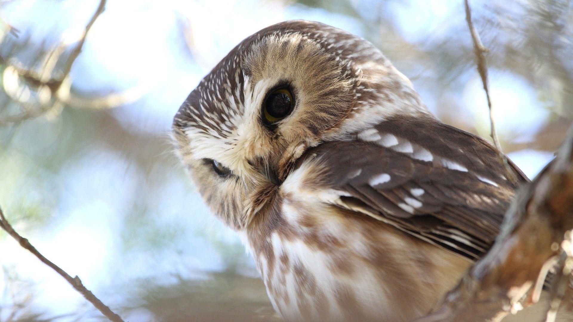 67 Owl Screensavers Wallpapers On Wallpaperplay In 2020 Owl Wallpaper Cute Owls Wallpaper Owl Pictures