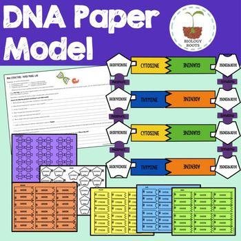 Dna Model Paper Project Dna Paper Model Dna Dna Model