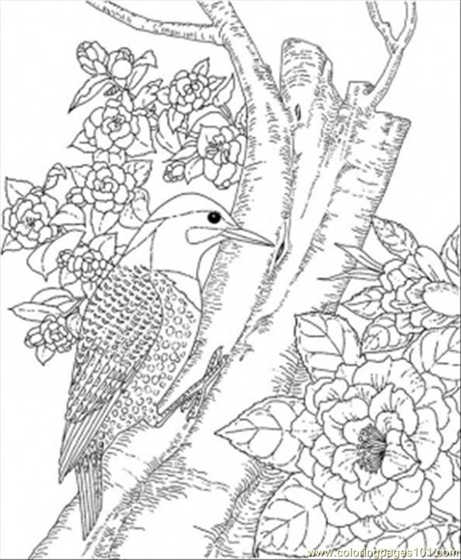 alabamastatebird_rbalbjpg (650×789) Downloads and sketches - fresh coloring pages for may