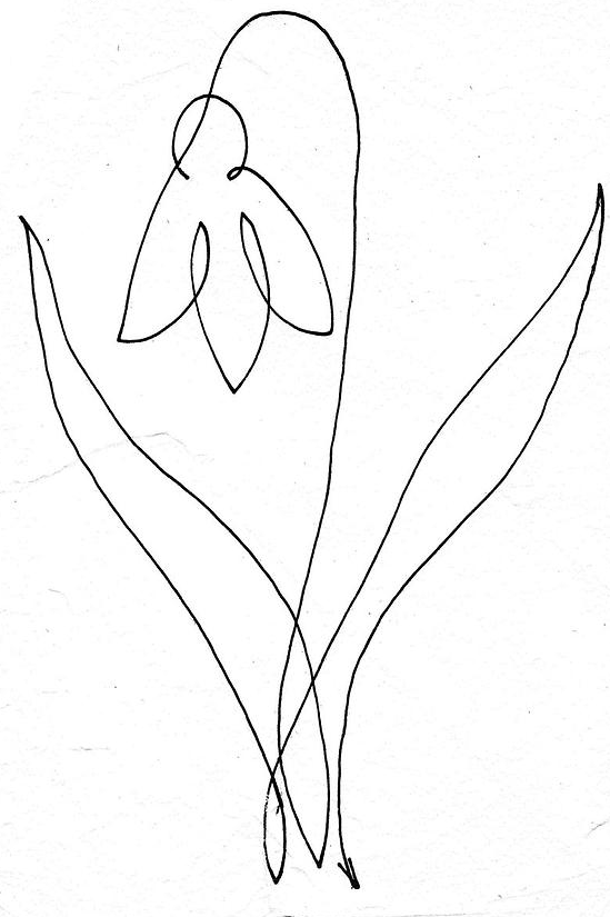 Continuous Line Drawing Of A Flower : Květina jedním tahem one line drawing continuous