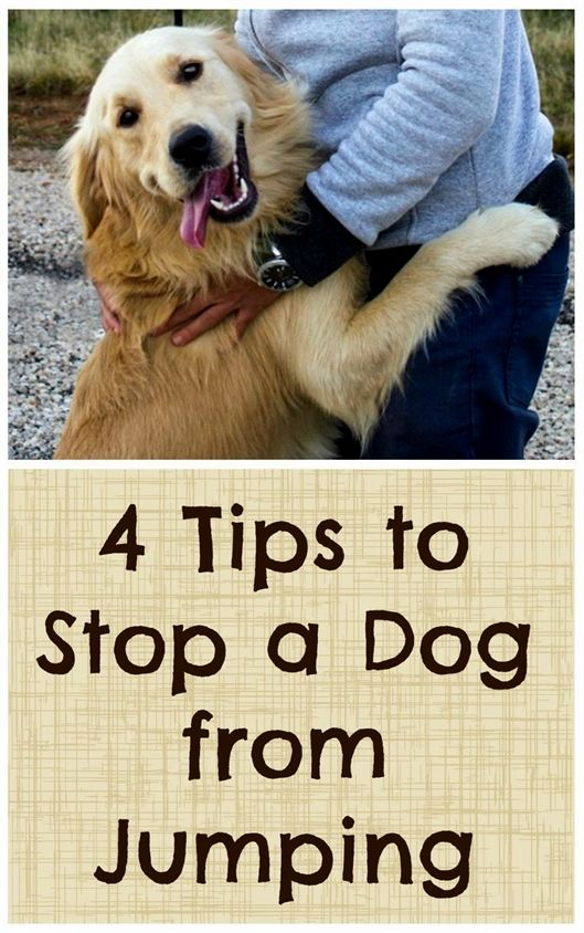 Electric Remote Dog Training Shock Collar Dog Training Toy Dog