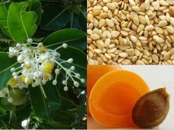 PEAUX GRASSES : quelles huiles végétales choisir ?