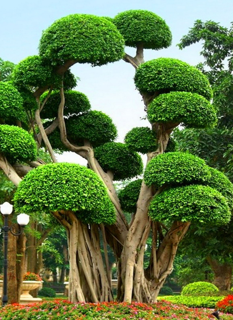 Here Are 30 Of The Most Beautiful Trees In The World That Look Straight Out Of A Fairy Tale Nature Tree Beautiful Tree Weird Trees