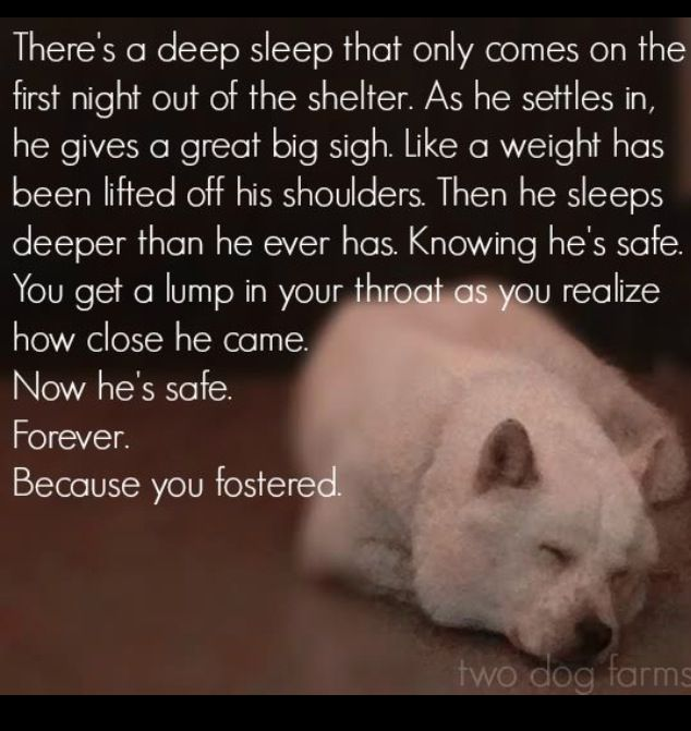 Pin By Angel Caudle On Wise Words Rescue Quotes The Fosters Dogs