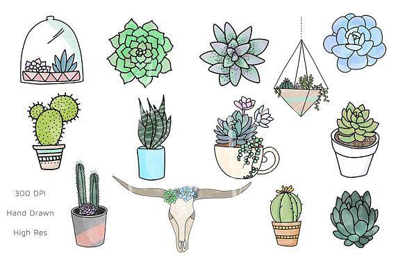 Cactus boho. Succulent clipart png succulents