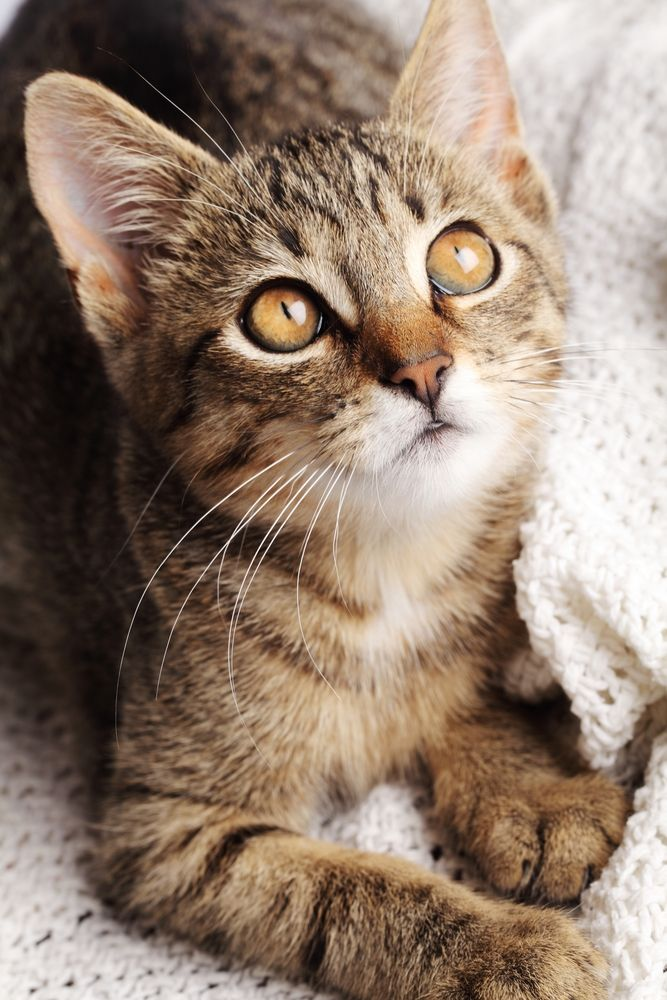 Can Cats Get Colds? Our Vet Experts Take A Look At Upper