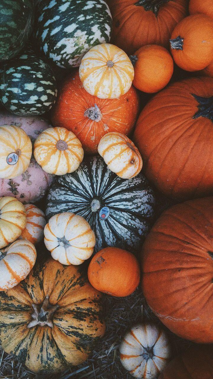 Vsco: rachelsperspective #Herbst #Kürbis #octoberwallpaperiphone