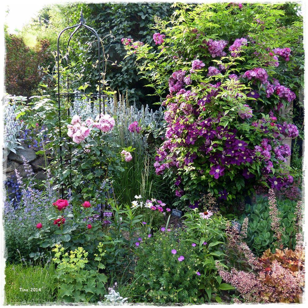 sweet laguna und perennial blue bilder und fotos garden garten garten ideen und sch ne g rten. Black Bedroom Furniture Sets. Home Design Ideas