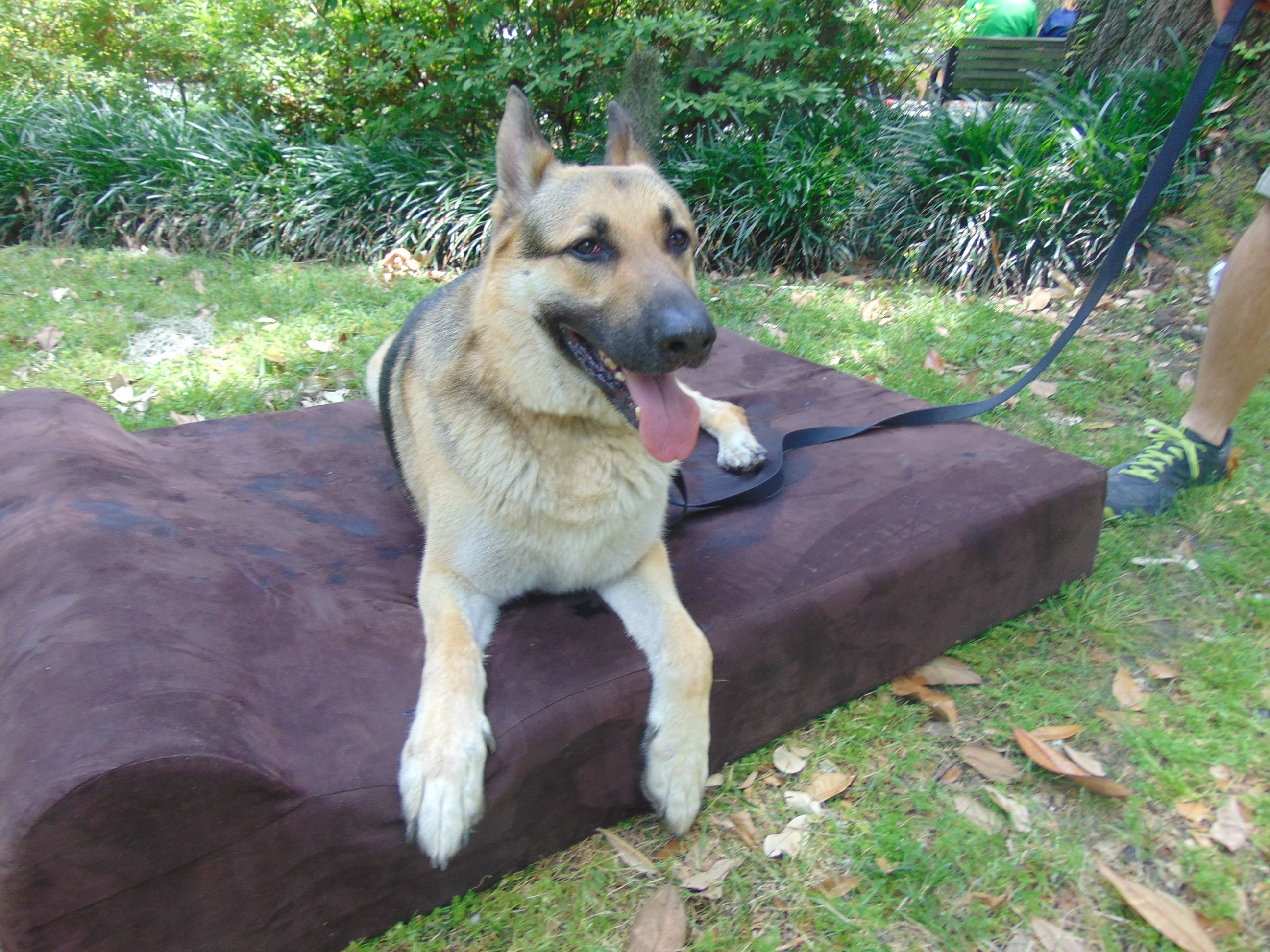 onewayfarms bed in orthopedic canada beds mattress com the dog snoozing with casper style
