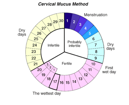 How Long Does It Take To Get Pregnant After Menstruation