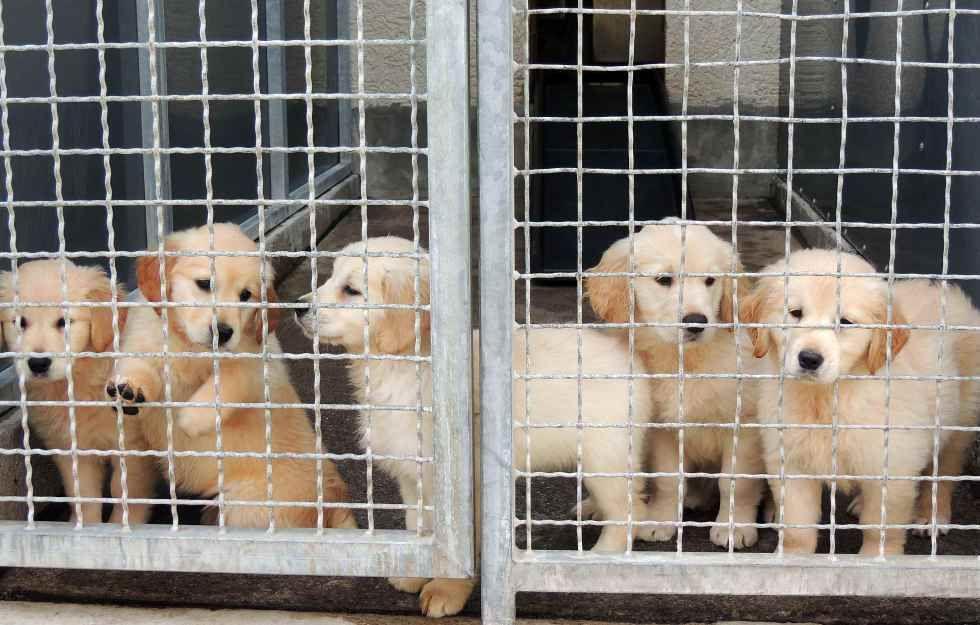 Krass 628 Hundewelpen Illegal Nach Deutschland Transportiert Mit Bildern Hundewelpen Hunde Welpen Welpen