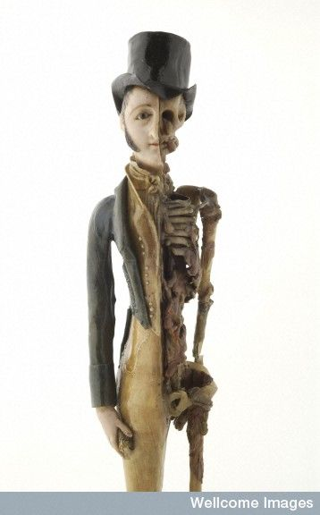 A stunning hand carved male memento mori figure c.1800. (via Wellcome Images) ~~ www.facebook.com/TheIrregularAnatomist ~~ www.twitter.com/Irr_Anatomist