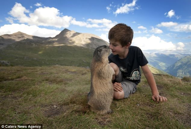 Marmot Whisperer: Matteo and his family spend two weeks every year in the Alps visiting his marmot friends  by Rachel McDermott, dailymail.co.uk #Marmot #Matteo_Walch #dailymail