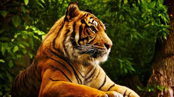 Twitter Animals Beautiful Tiger Pictures Pet Tiger