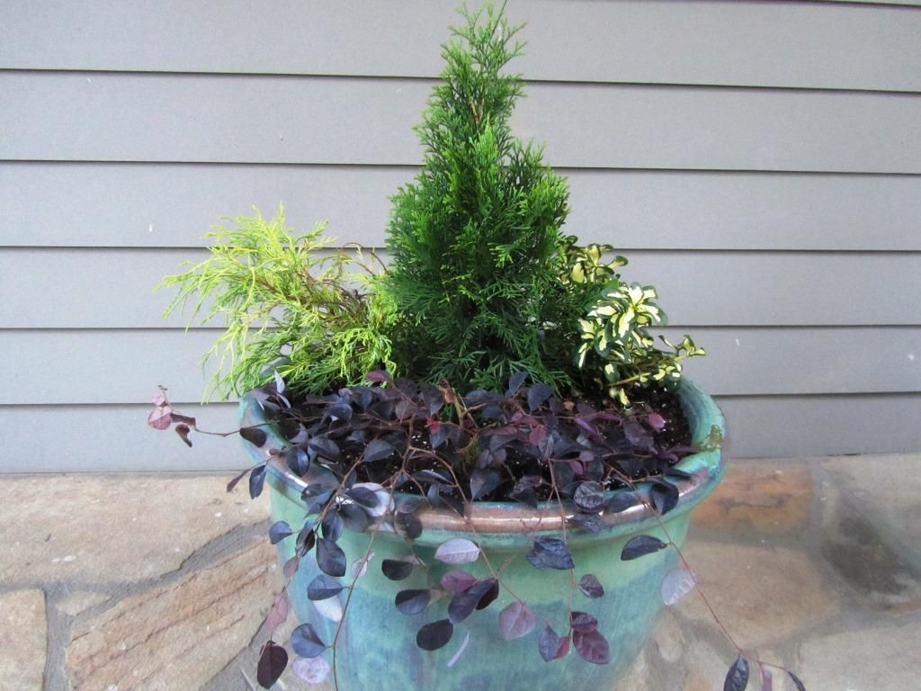 4 ideas for fall winter container gardens emerald green for Small container garden ideas