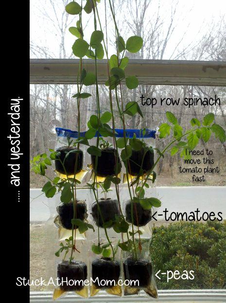 Indoor gardening gardening jargarden kids garden pinterest indoor gardening entice kids to eat better by growing their own food workwithnaturefo