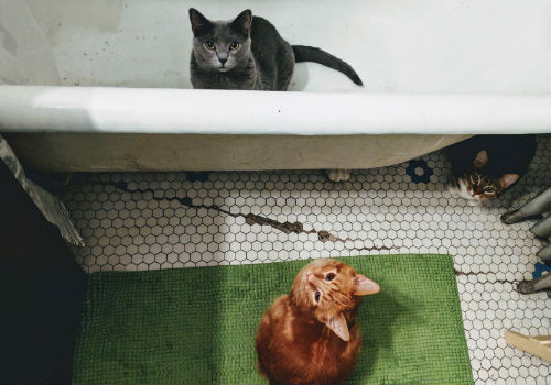 Why Do Cats Follow You Into The Bathroom Cute Cat Names Cat Behavior Baby Kittens