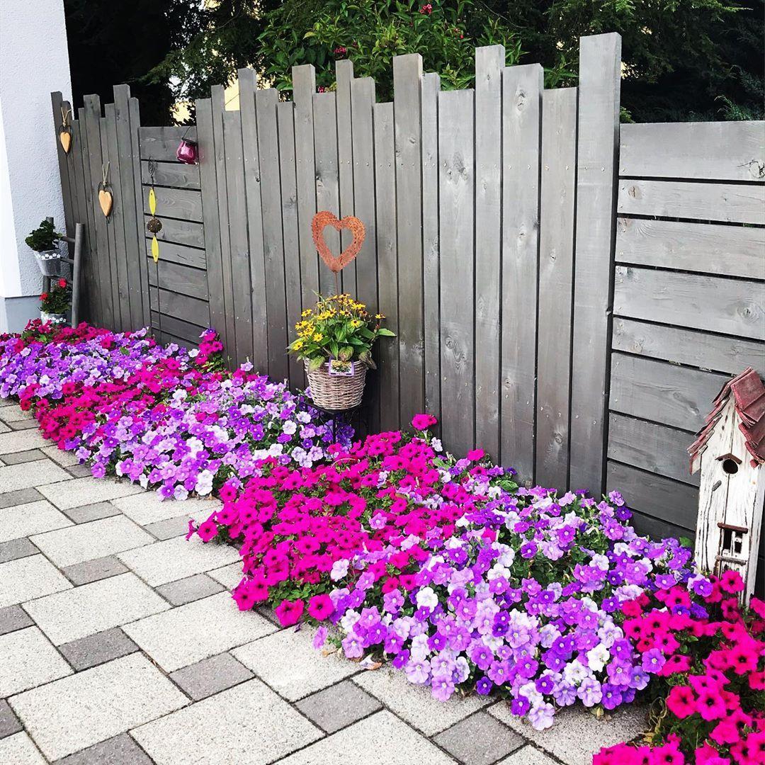 Sommer Blumen Garten Gartenideen Petunien Holzzaun Holzzaunesindschon Diy Diys Ganzerstolz Gartengestaltung Garte Plants Outdoor Outdoor Structures