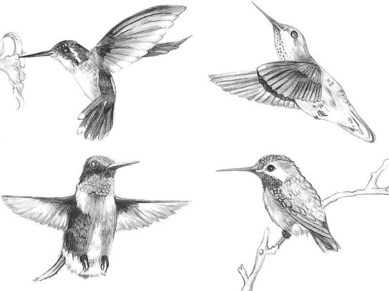 Hummingbirds #Art #Drawing #Hummingbird #Pencil #Sketch | Tattoos | Pinterest | Art Drawings ...