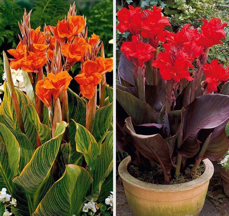 Quiet Corner Container Gardening Ideas: Lily Plants, Water Garden Plants