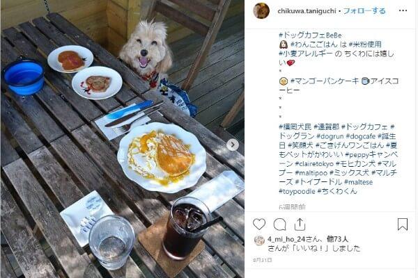 福岡 犬と行けるドッグカフェ人気おすすめ12選 おしゃれで可愛い店舗を紹介 Inunavi いぬなび 犬 いぬ ドッグラン