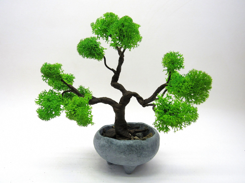 Indoorbonsai Indoor Bonsai Tree Bonsai Tree Types Bonsai Tree Care