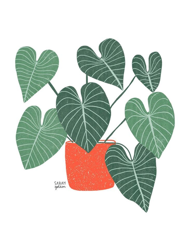 Philodendron No. 1 Print -   18 planting Illustration paintings ideas
