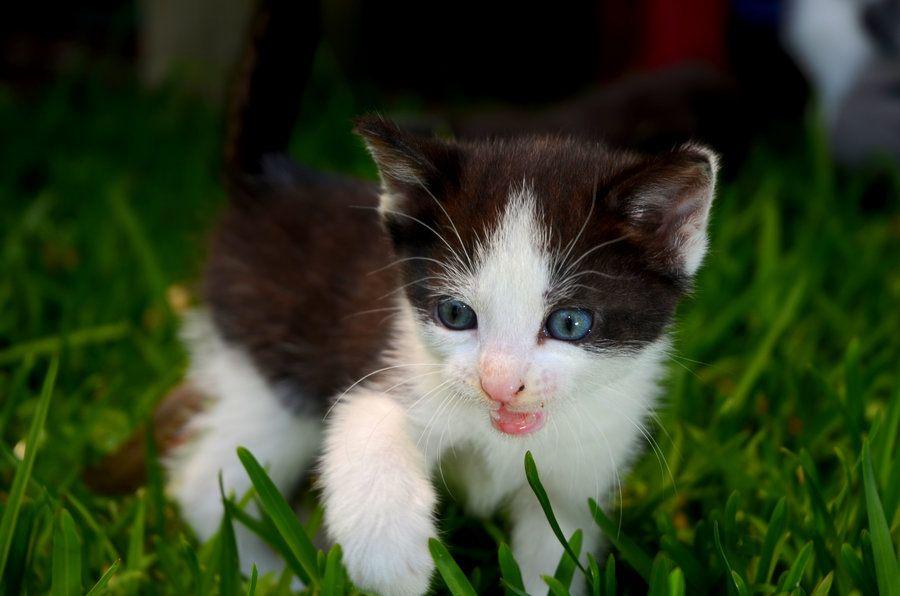 kittens by MrVendetta666 on DeviantArt
