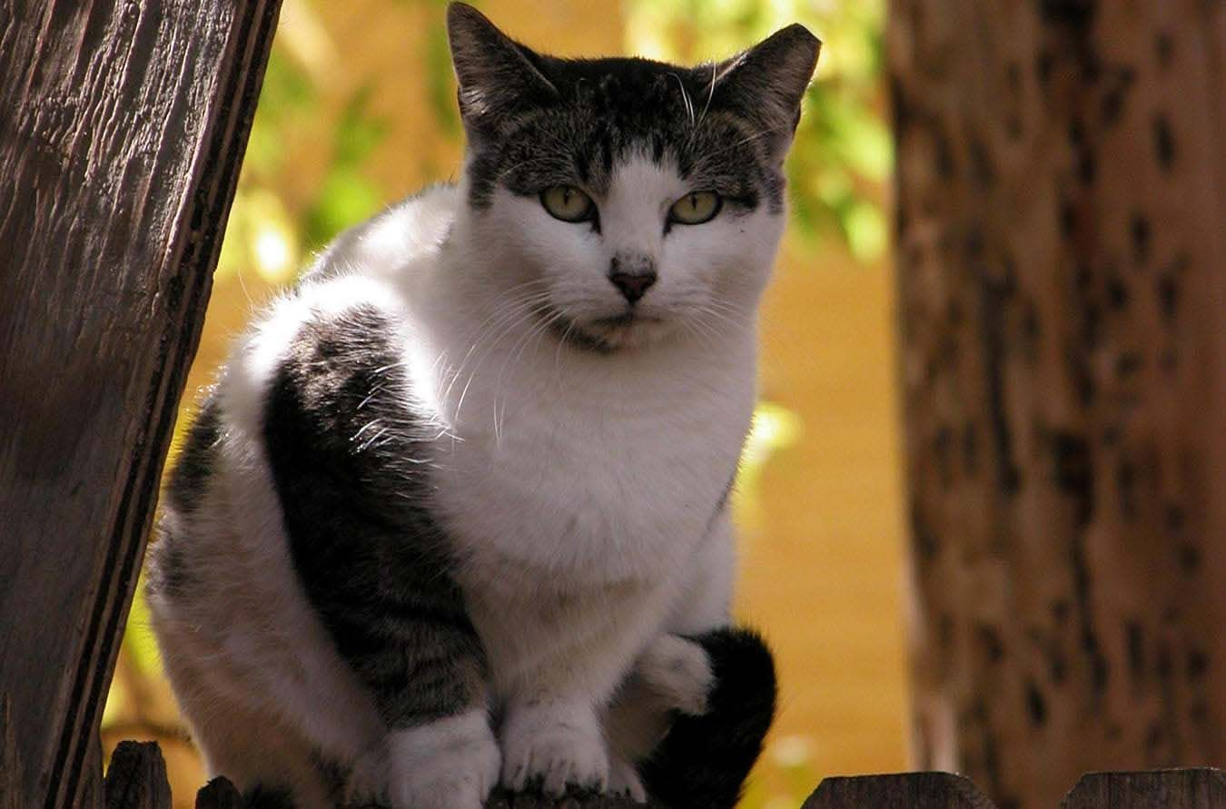 Printer Friendly Colony Care Guide Alley Cat Allies