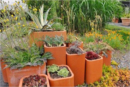 Cactus Blog 2009 June Plants Unusual Plants Container Garden Succulents
