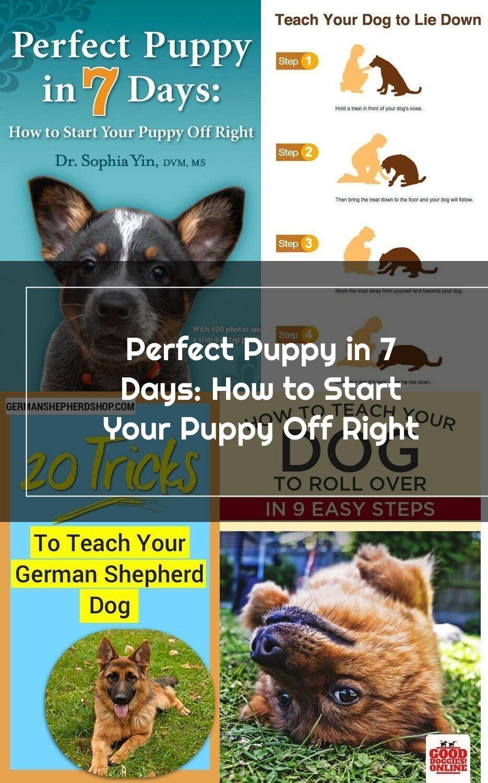 Perfect Puppy in 7 Days puppypottytrainingin3days