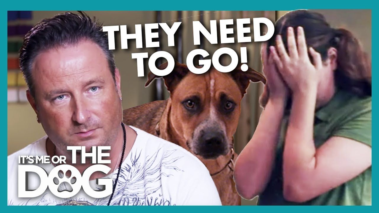 Father Threatens To Get Rid Of Stupid Family Dogs It S Me Or The Dog Youtube Family Dogs Dogs Dog Tv Shows