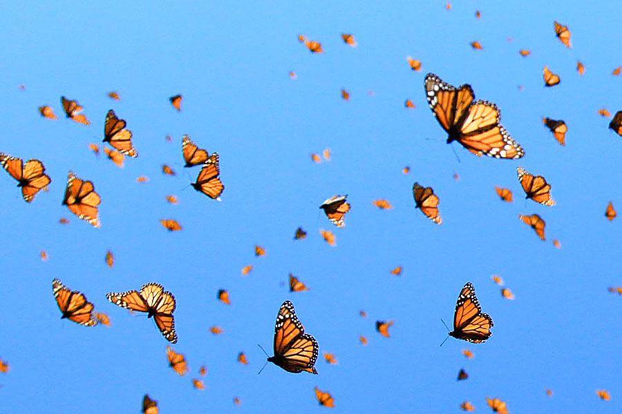 Change Is Coming Vandenvogue Aesthetic Desktop Wallpaper Butterfly Wallpaper Aesthetic Iphone Wallpaper
