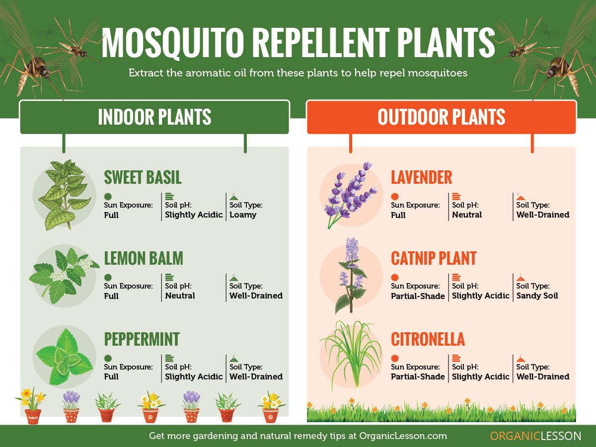 Mosquito Repellent Plants that Keep Mosquitoes Away