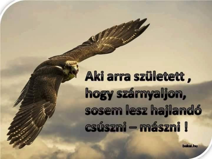 tetszik idézetek Tetszik Lájk   Tetszik Lájk added a new photo.   Inspirational
