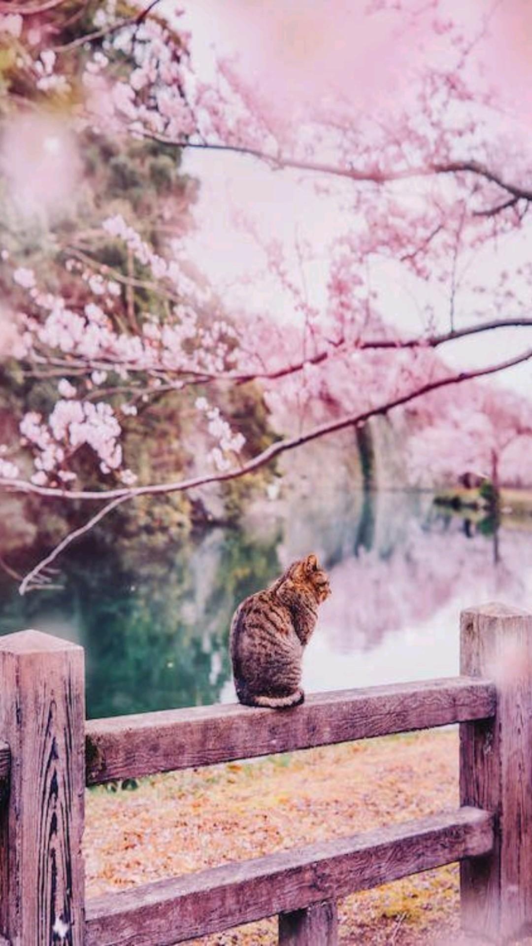 Cherry Blossom Cats