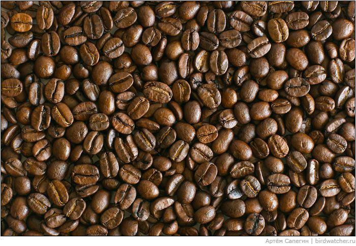 Сoffee beans, lots of coffee beans