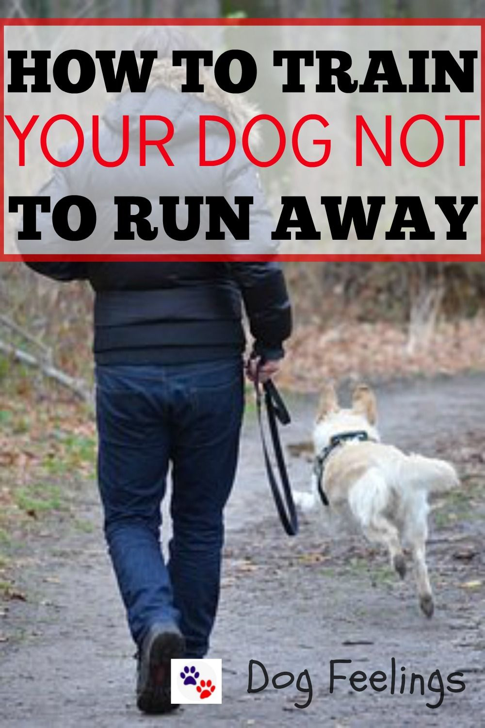 How To Teach A Dog Not To Run Away How To Get A Dog Not To Run