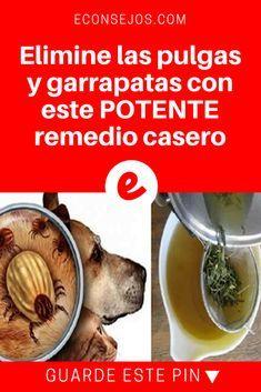 Eliminar pulgas | Elimine las pulgas y garrapatas con este POTENTE remedio casero | Nuestro consejo especial de hoy, trae un procedimiento casero que le ayudará a acabar de una vez por todas con este problema.
