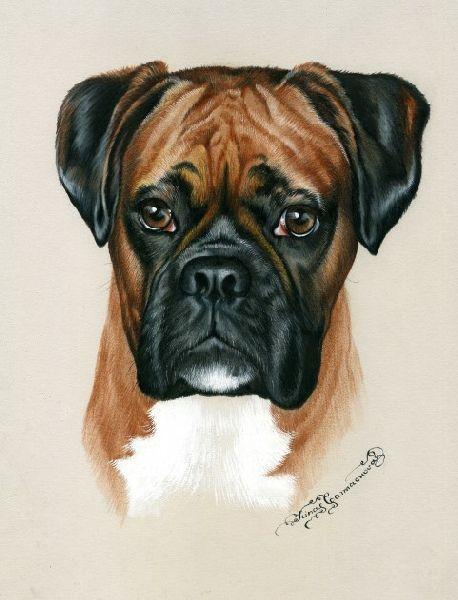 Irina garmashova cawton artiste peintre animalier sp cialiste des peintures et portraits - Dessin chien boxer ...
