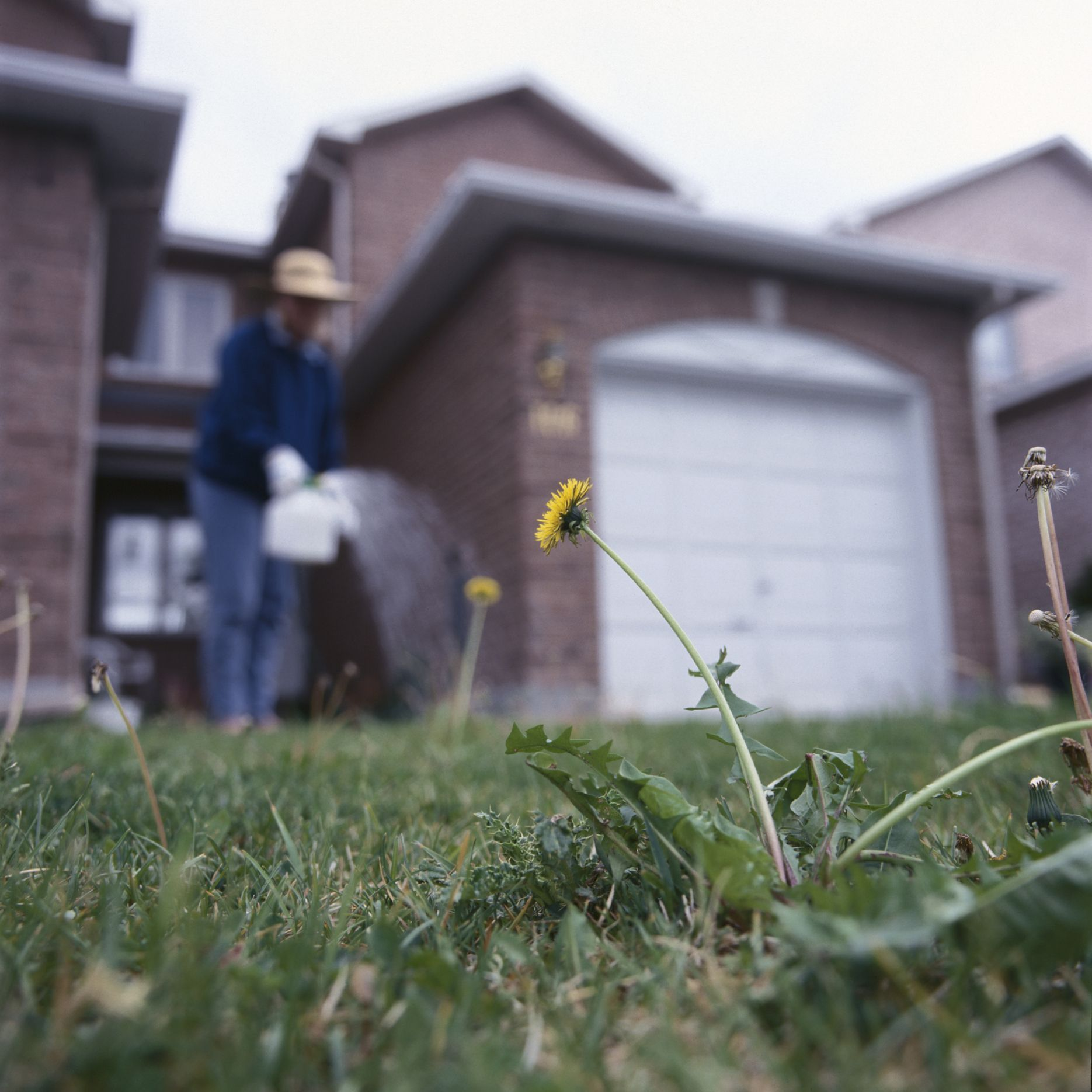 Salt and water mixture to kill weeds in grass and flowers weed