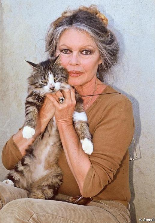 Брижит Бардо и животные (фото): кошка / Brigitte Bardot & animals (Photos):  cat | Брижит бардо, Знаменитости, Кинозвезды