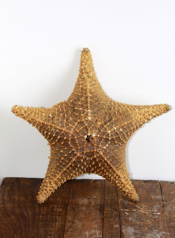 Large Natural Starfish Shell, Vintage Cottage Beach Chic,Starfish, Seashell Beach Wedding, Beach House Decor, Rustic Beach Decor