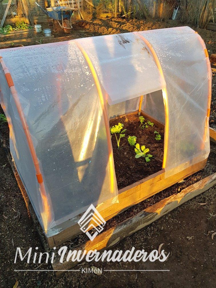Fabricamos mini invernaderos para cultivar tus propios alimentos, generando un micro clima que provoca que las plantas sobrevivan de mejor manera ante el frio y las plagas. Incluyen techado, abono y hortalizas plantadas a eleccion.