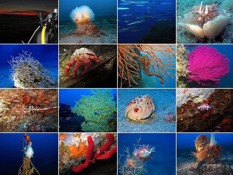 Diving Club ecosostenibile ToscanaInternational diving