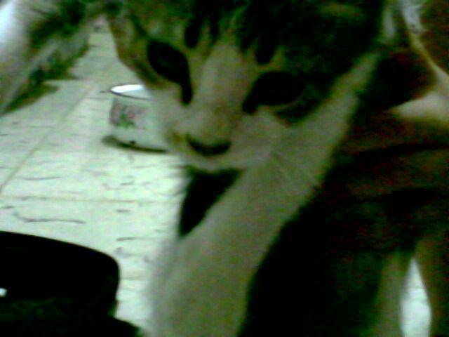 De bebe # gato # cat