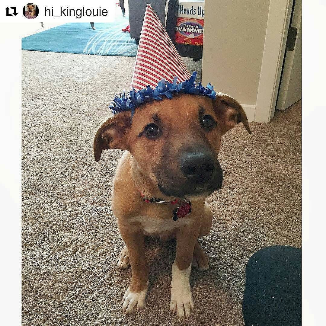 Repost Hi Kinglouie A Puppy Party At PetSmart Brand New Toy And Moms Giving Me More Treats I Really Like Celebrating My Four Month Birthday