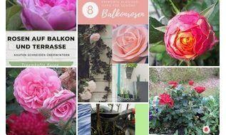 10 pflegeleichte Balkonpflanzen für die Sonne