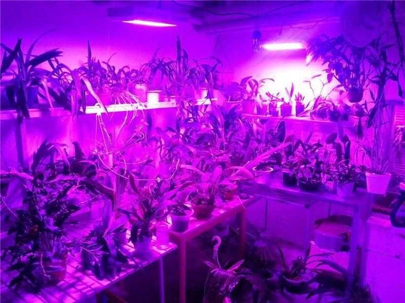 uv light for indoor plants | Led Grow Lights For Indoor